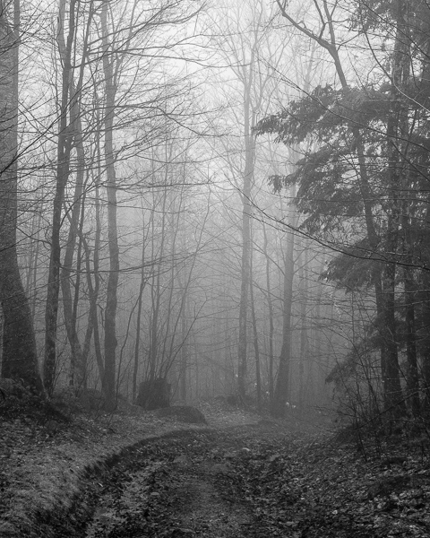 Foggy Woods Road #3