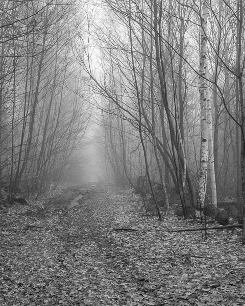Foggy Woods Road #4