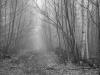 Foggy Woods Road #4
