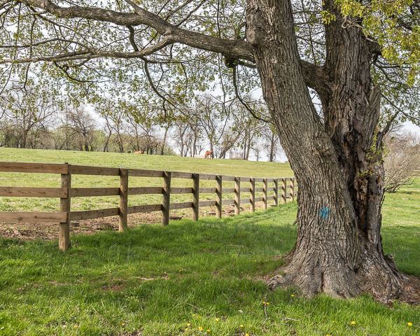 Pasture in Spring