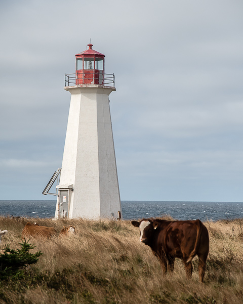 Enragée Point Lighthouse, NS