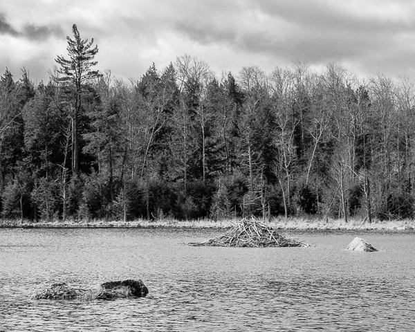 Beaver Pond and Lodge (Harris Center Property on Brimstone Corner Road)