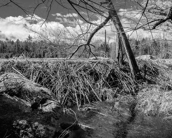Beaver Dam Which Creates the Pond