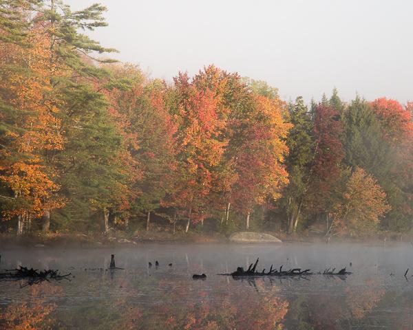 Birch Pond
