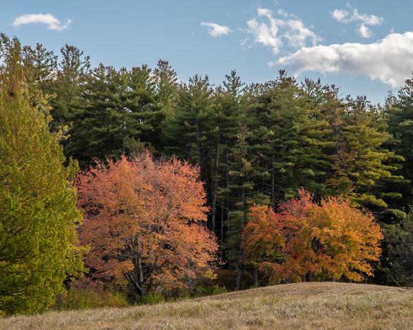 Autumn Foliage: Fields Edge
