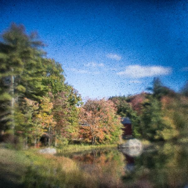 Bran and Autumn Foliage