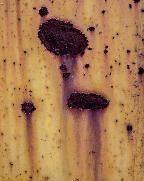Study in Yellow and Rust #7