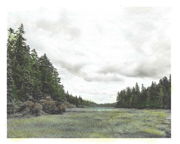 Schoodic Peninsula  Wetland