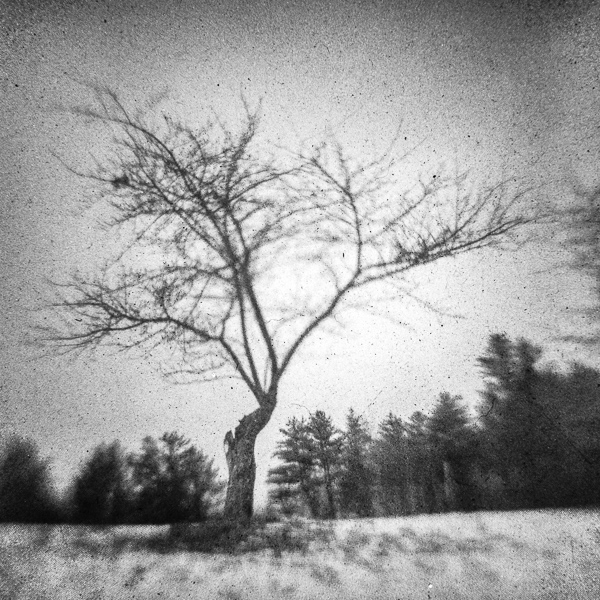 Bass Farm Tree #1