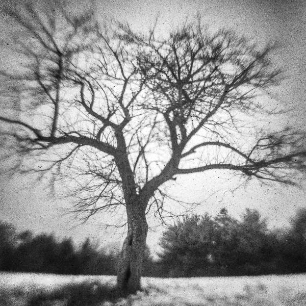 Bass Farm Tree #3