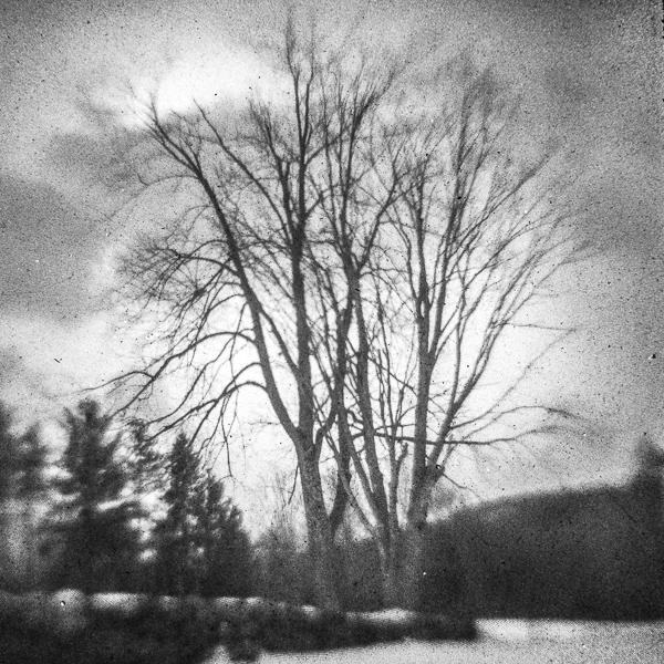 Bass Farm Tree #4