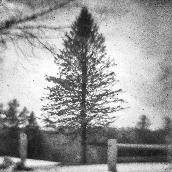 Bass Farm Tree #6