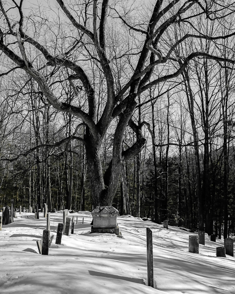 Walnut Tree - Center Cemetery