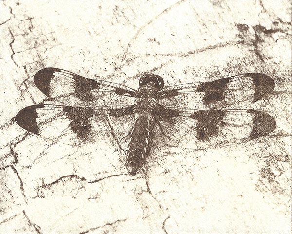Dragonfly (on Crane's Cover)
