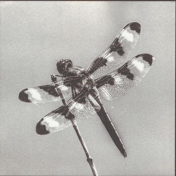 Twelve-Spotted Skimmer (salted paper print)