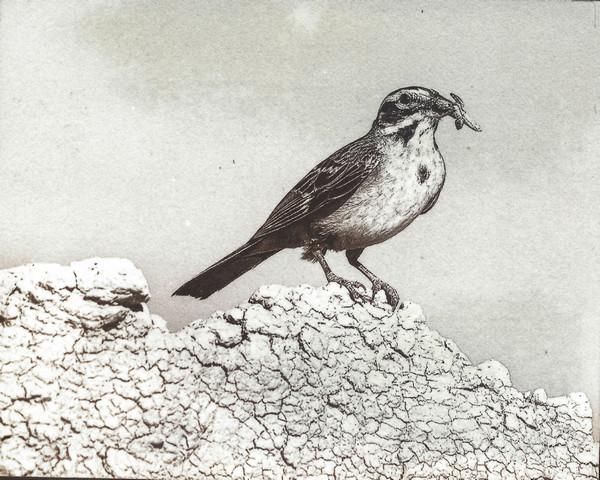 Mockingbird with Prey