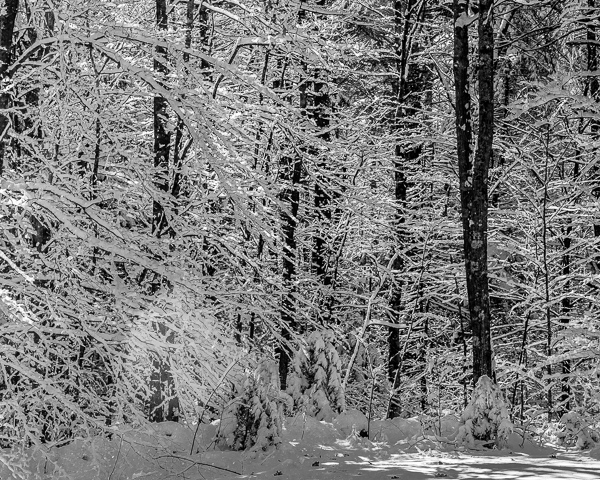 Winter Woods #2