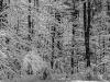 Winter Woods #2