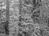 Winter Woods #3
