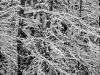 Winter Woods #4