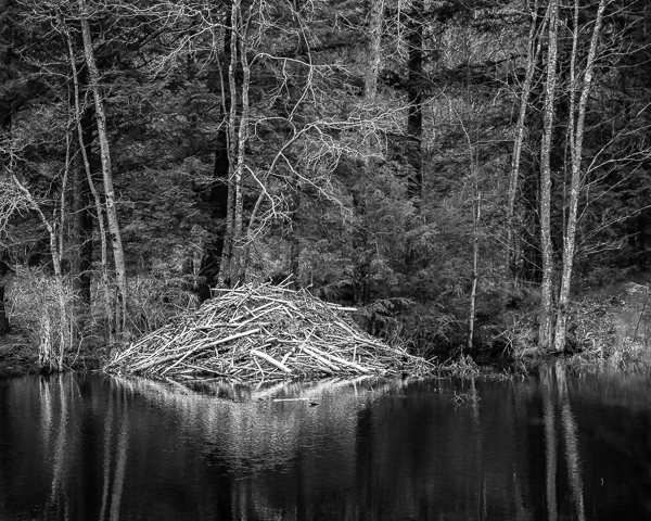 Beaver House in Early Spring