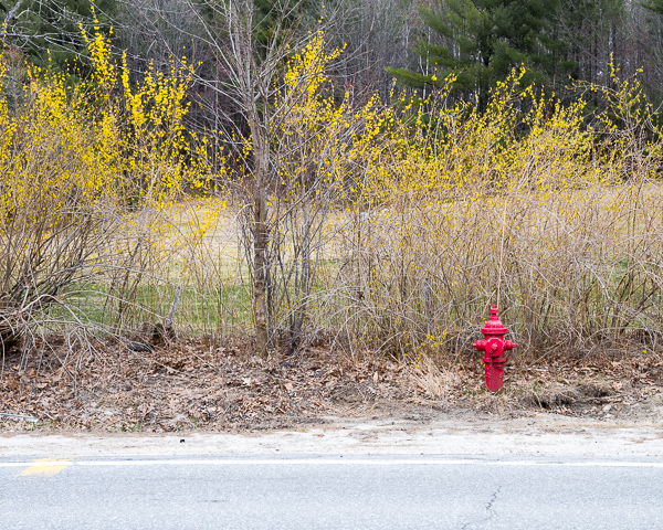 Early Spring Hydrant