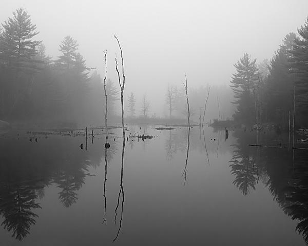 Eva's Marsh WMA, Hancock, NH #2