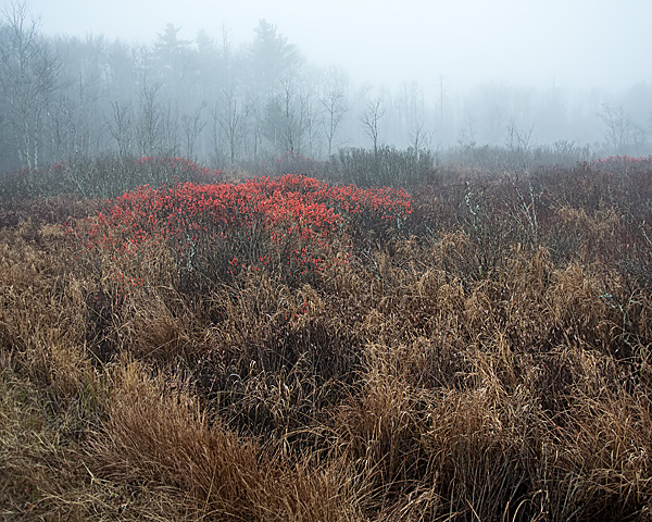 Winter Berries, Hancock, NH