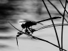 Dragonfly Silhouette #2