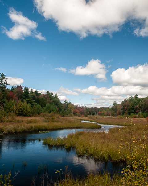Wetland, Fitzwilliam NH #2