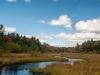 Wetland, Fitzwilliam NH #2