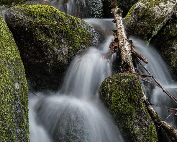 Vernal Flow #3