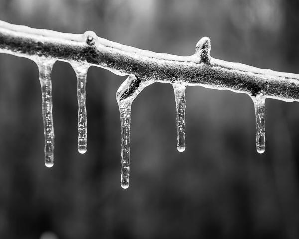 Twig Under Ice