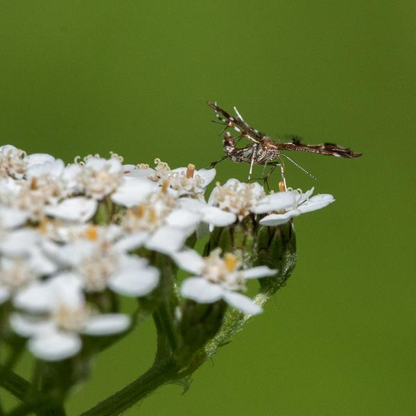 Insecta Fantastica