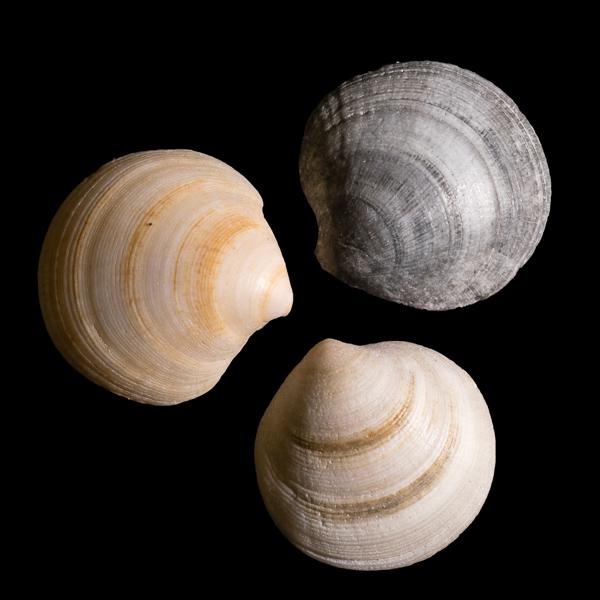 Shells #4