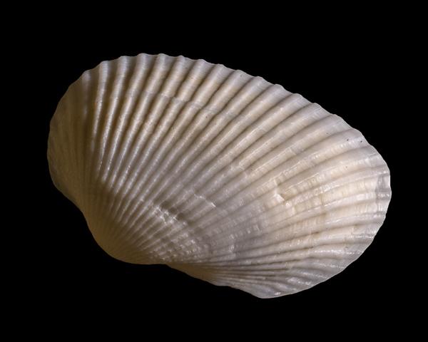 Shell #3