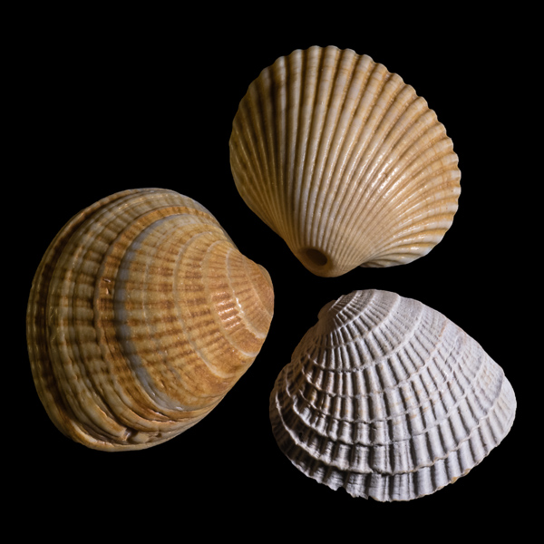 Shells #5