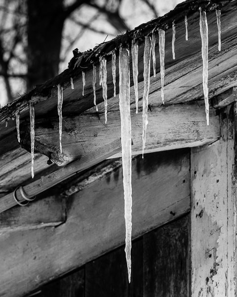 Dereliction, Too - Icicles