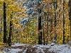 October Snow #1