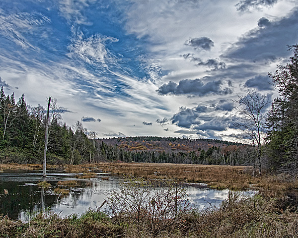 Beaver Swamp in Late Autumn