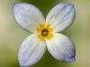 Wild Flower Garden, Acadia NP #2