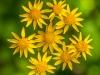 Wild Flower Garden, Acadia NP #3