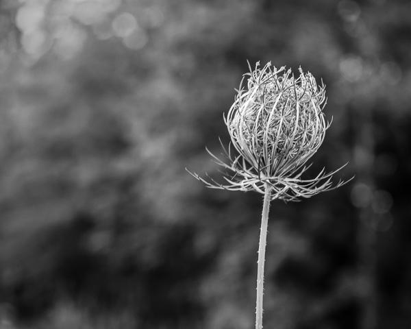 Botanical #3