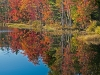 07 - Autumn Foliage Reflected