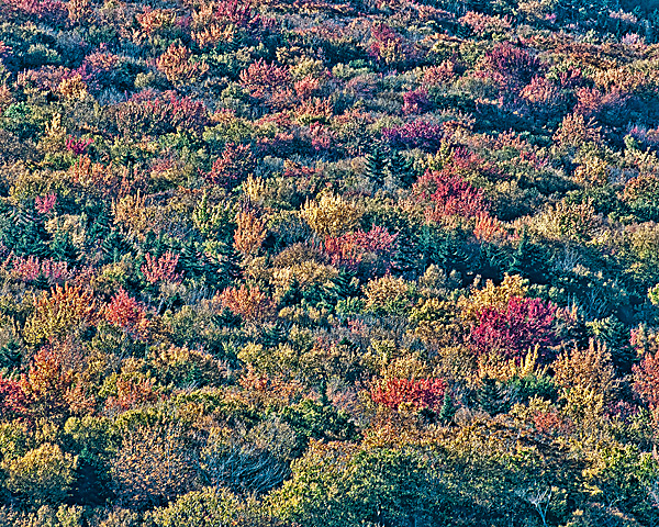 Fall Foliage (Crawford Notch)