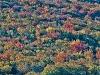 Fall Foliage (Crawford Notch)