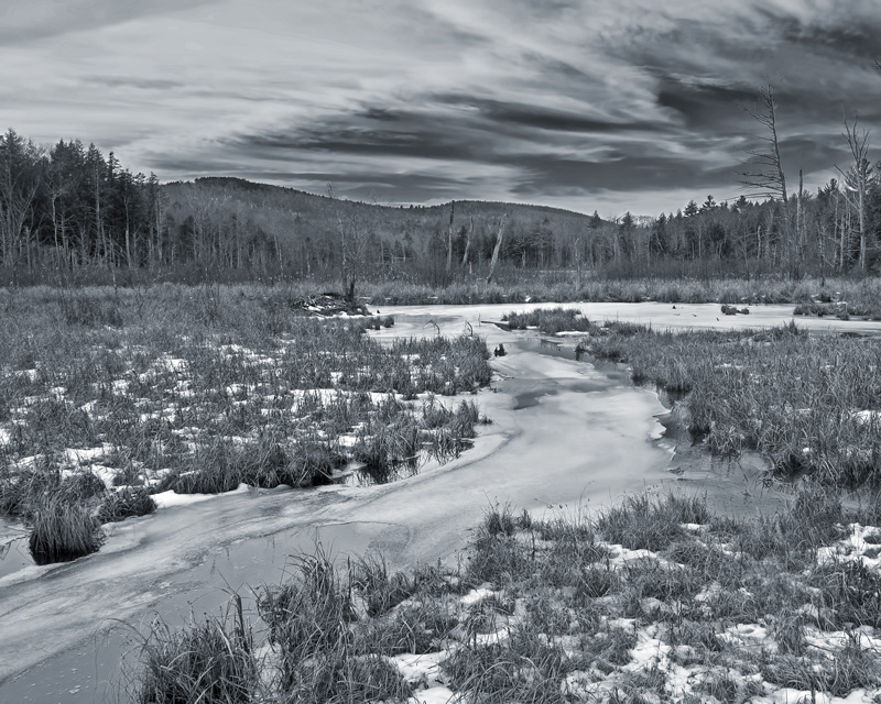 Beaver Swamp in Early Winter