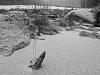 Snowy Beaver Dam