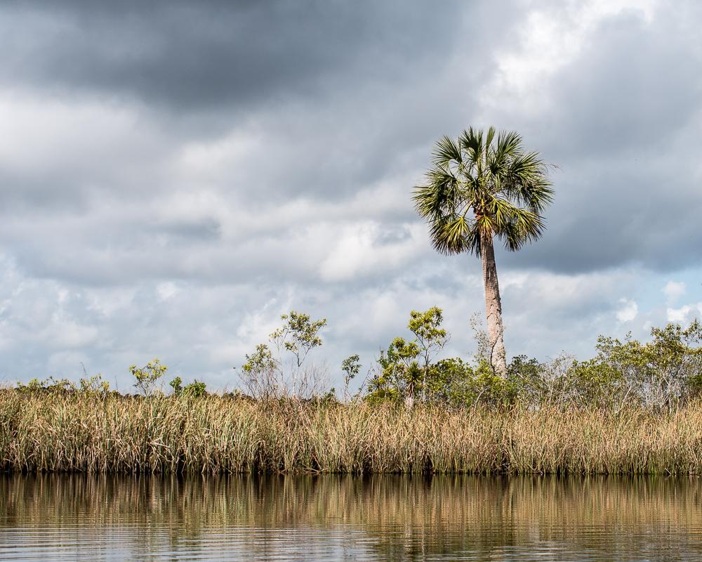Apalachicola Forest Landscape
