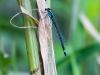 Bluet (ID Needed) #3